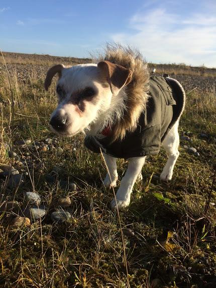 Pippi in her best winter coat.
